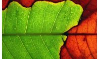 Fine Art Photography: Tips for Photographing a Leaf