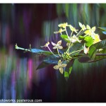 Creating Unusual Bokeh With Your Fingers