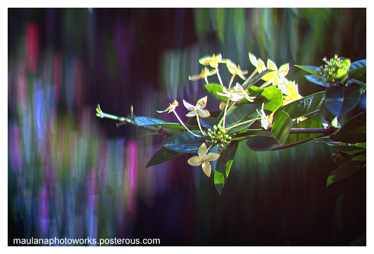 Beautiful Unusual Bokeh