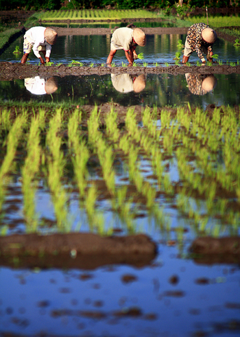 Beginner's Guide to Photography  Controlling DOF - Rice Field From Far Distance