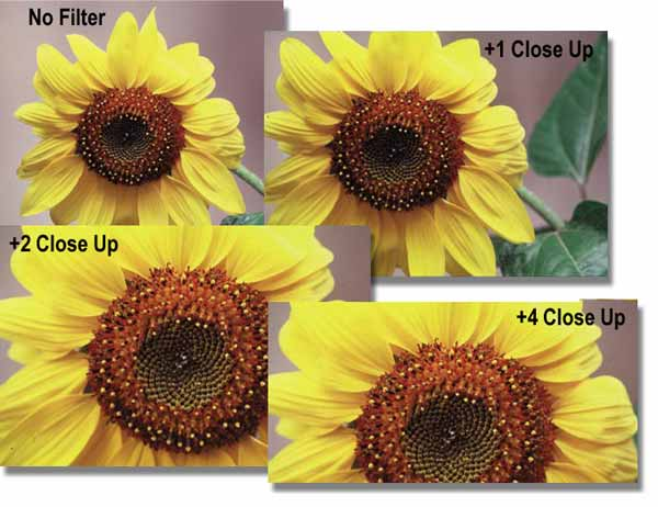 Filters Definition – closeup Filter Effect