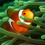 Tips: Photographing Fish in Aquariums