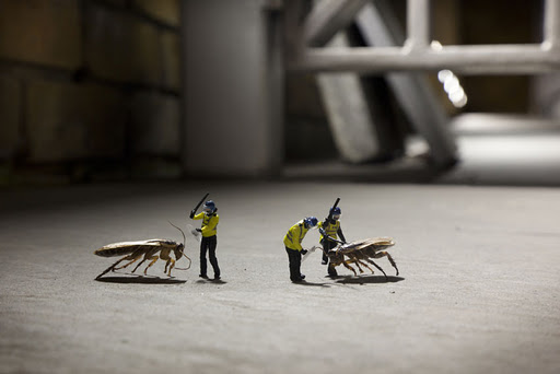 Slinkachu Photography – animals