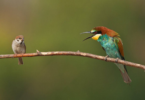Birds Photography Tips - Photographs By Bogdan Boev