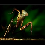 Tips for Shooting Macro Photographs of Insects
