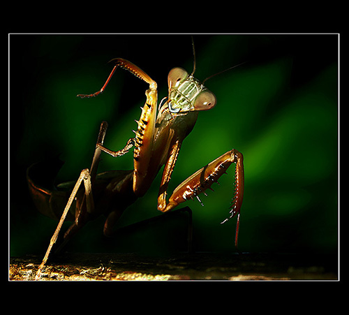 Macro Photographs of Insects