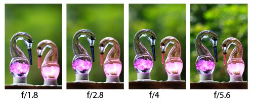 Beginner's Guide to Photography Controlling DOF – Aperture Settings
