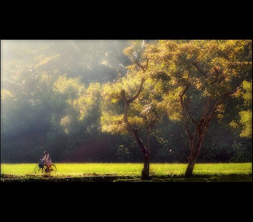 Photography Tips Creating Extraordinary Picture During Golden Hours - Early In The Morning