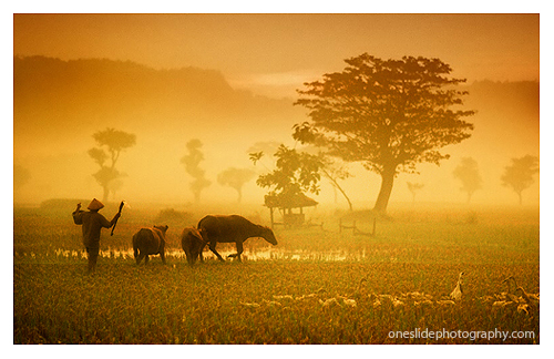Photography Tips Creating Extraordinary Picture During Golden Hours - Indonesian Farmer