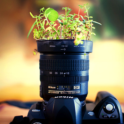 Bored or Tired  of Photographing and How to Overcome It