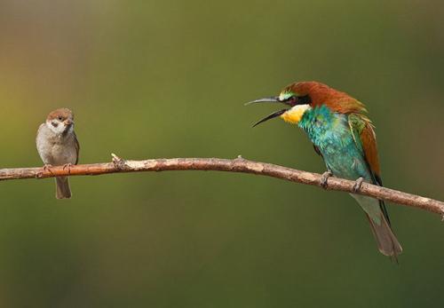 Birds Photography Tips - Photographs By Bogdan Boev