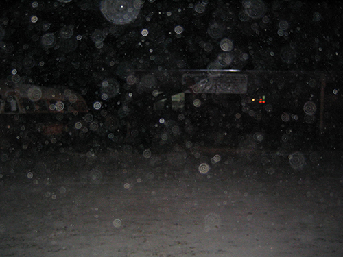 Orbs captured in photograph